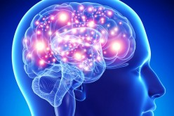Brain Initiative: scoperti nuovi e straordinari segreti del cervello