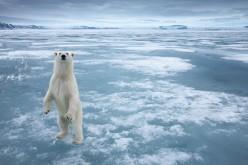 L'Ue a favore di un santuario che tuteli il Polo Nord