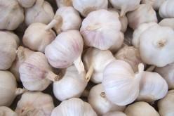 Salute, scoperte potenti proprietà anti-batteriche nell'aglio