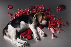 Bandita in Europa la vendita di cosmetici testati sugli animali