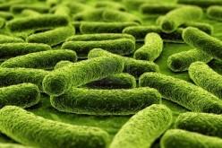 """Batteri, hanno una """"firma"""" unica nel nostro organismo"""