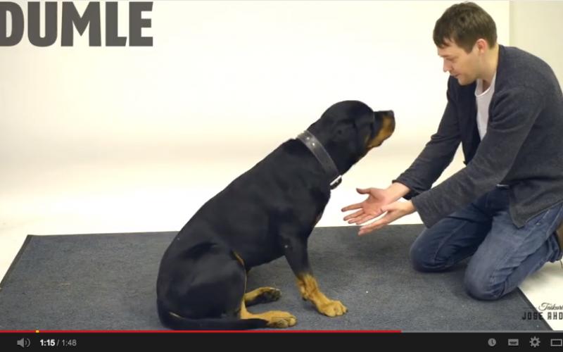 I cani e la magia: stupore a quattro zampe in un video virale