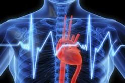 Cardiopatia, un verme per studiare e prevenire i danni al cuore