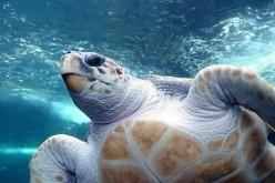 Questo San Valentino regala una tartaruga del CTS