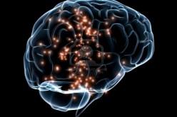 Scovato il gene dell'intelligenza