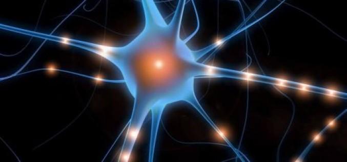 Cervello, scoperto il gene che regola la formazione di nuovi neuroni
