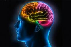 Con la nocicettina il cervello cura da sé ansia e stress