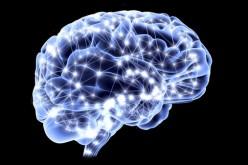 Il cervello necessita di vitamina D esattamente come le ossa