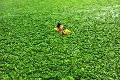 Cina: la spiaggia diventa un prato verde