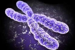 Cromosomi artificiali per creare biocarburante e farmaci rari