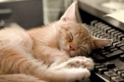 "Dell e i laptop dal ""pungente"" odore felino"
