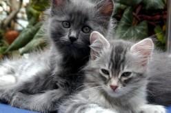 L'amicizia fra uomo e gatto nasce in Cina e risale a 5.300 anni fa