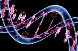 HiSeq X Ten: una macchina low cost per sequenziare il genoma