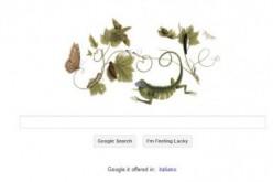 Google celebra la naturalista Anna Maria Sibylla Merian
