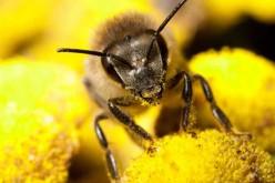 Greenpeace: una petizione e un documentario per salvare le api