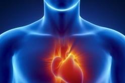 Creato in laboratorio un tessuto cardiaco artificiale