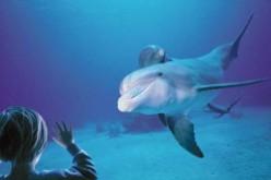 L'Acquario di Genova inaugura la nuova casa dei delfini