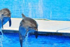 Lav e Marevivo lottano per la chiusura dei delfinari: gli italiani sono favorevoli