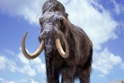 L'estinzione del mammut non è colpa dell'uomo