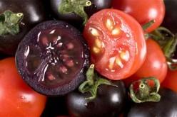 Pomodori viola OGM contro il cancro