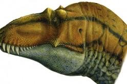 Scoperto un nuovo parente del Tirannosauro, il Lythronax argestes