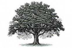 Un albero genealogico da record con 13 milioni di rami