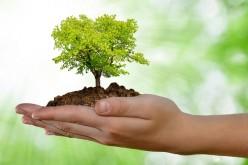 Un albero per ogni neonato