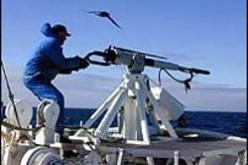 Whaling: caccia grossa al dirigente
