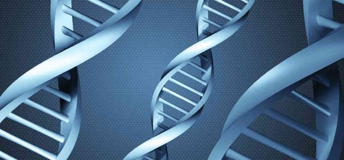 Genetica, Crispr diventa un'arma di precisione contro il Dna malato