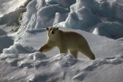 Canon Europe supporta la spedizione alle isole Svalbard organizzata da WWF e NPI