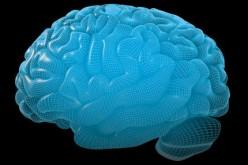 Cervello, ecco la mappa più dettagliata mai realizzata