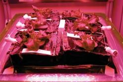 Gli astronauti coltivano da sé frutta e verdura con VEGGIE