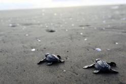 La tecnologia M2M di Telit a sostegno delle tartarughe e del turismo sulla costa del North Carolina