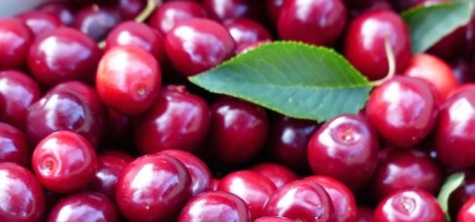 Ciliegie frutto dell'estate, un toccasana per cuore e fegato
