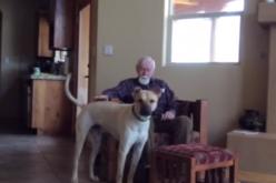 Malato di alzheimer parla solo con il suo cane: il video virale commuove il mondo