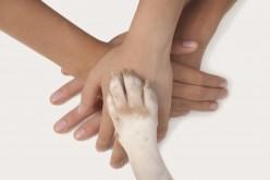 Pet Therapy, i cani fanno bene al cuore