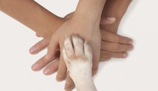 Vivere con un cane fa bene al cuore e allevia lo stress