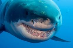 Riprodotta pelle di squalo con la stampa 3D