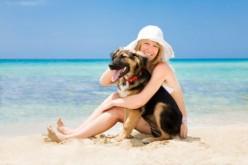 Sì ai cani in spiaggia in Veneto: libero accesso agli animali da compagnia