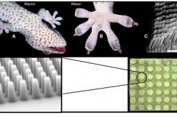 Z-man: i guanti da scalata di DARPA ispirati al geco