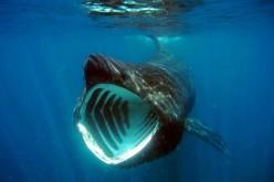 In Sardegna reti hitech per proteggere lo squalo