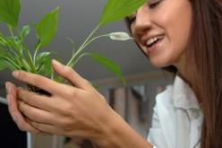 Lavoro, la sindrome da rientro in ufficio si cura con le piante