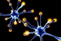 Cervello, ripararlo con le cellule staminali si può