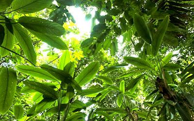 Le piante assorbono più CO2 del previsto