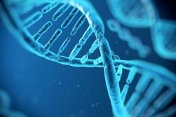 Sla, scoperto un nuovo gene che la causa