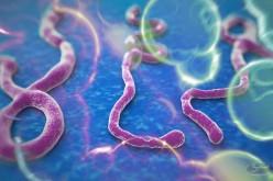 Ebola e hacker, il virus infetta anche la Rete