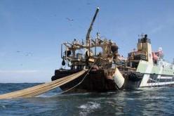 """Greenpeace denuncia i """"Monster Boats"""", responsabili dello sfruttamento dei mari"""