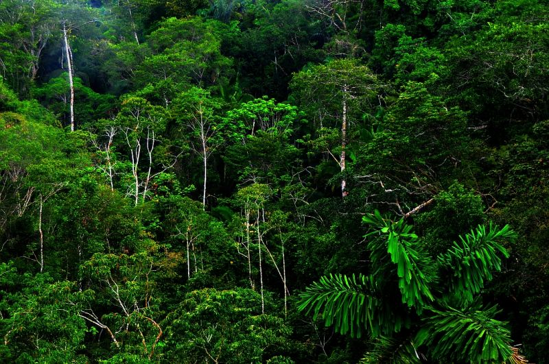 La foresta pluviale assorbe più co2 del previsto