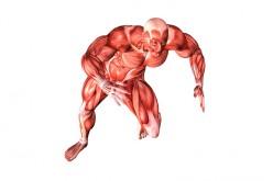 Muscoli in provetta, dagli USA i pezzi di ricambio per il corpo