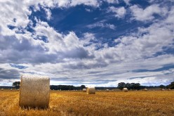 Agricoltura 2.0, arriva l'app che protegge i raccolti